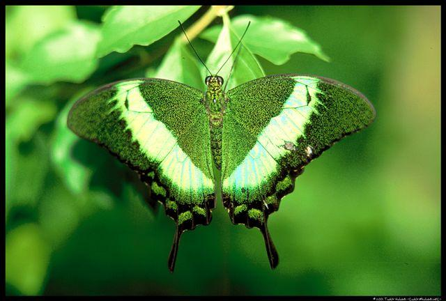 Butterfly | Grassroots Consulting, Inc.